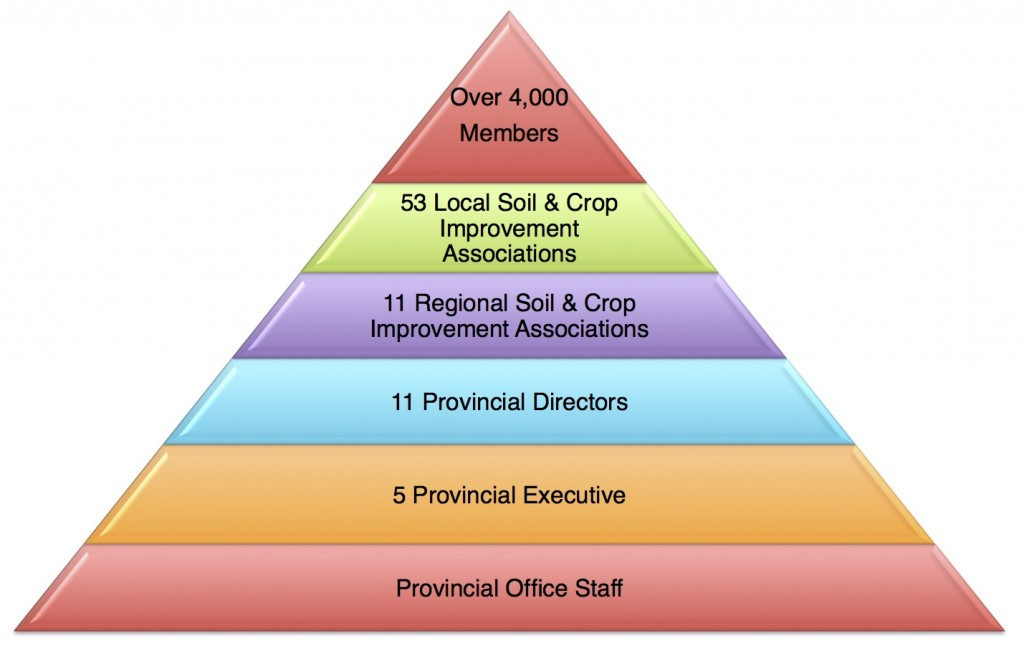 Association Structure Pyramid