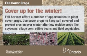 Cover crops Fall postcard