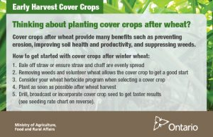 Cover crops early harvest postcard