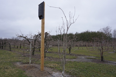 Bat box in the orchard